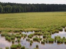 Parque nacional de Ķemeri (Letónia) Imagem de Stock Royalty Free