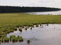 Parque nacional de Ķemeri (Letónia) Foto de Stock Royalty Free