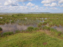 Parque nacional de Ķemeri (Letonia) Fotos de archivo