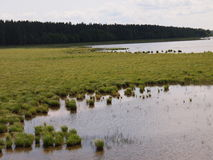 Parque nacional de Ķemeri (Letonia) Foto de archivo libre de regalías