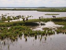 Parque nacional de Ķemeri (Letonia) Imagen de archivo libre de regalías
