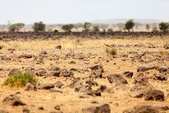 Parque nacional de Aboseli, Kenya foto de stock royalty free