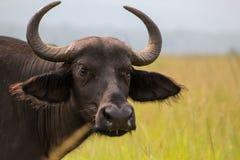 Parque nacional de Akagera em Ruanda imagens de stock