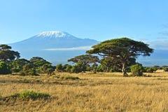 Parque nacional de Amboseli Foto de Stock