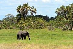 Parque nacional de Amboseli Fotografía de archivo libre de regalías