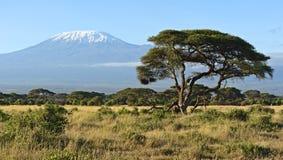 Parque nacional de Amboseli Imagen de archivo