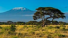 Parque nacional de Amboseli Fotografia de Stock