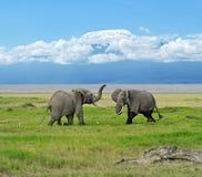 Parque nacional de Amboseli Fotos de archivo