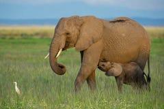 Parque nacional de Amboseli fotos de archivo libres de regalías