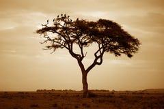 Parque nacional de Amboseli Foto de Stock Royalty Free