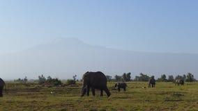 Parque nacional de Amboseli, al lado de la TA kilimanjaro Fotos de archivo