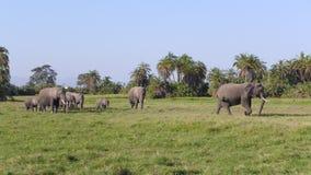 Parque nacional de Amboseli, al lado de la TA kilimanjaro Imágenes de archivo libres de regalías