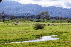 Parque nacional de Arusha imagenes de archivo