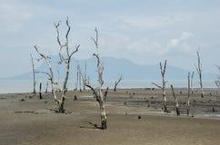 Parque nacional de Bako Foto de archivo libre de regalías