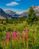Parque nacional de Banff da geleira da curva Foto de Stock