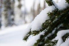 Parque nacional de Banff no inverno Foto de Stock