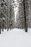 Parque nacional de Banff no inverno Fotos de Stock