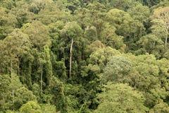 Parque nacional de Borneo Imagen de archivo
