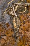 Parque nacional de Buley Rockhole Litchfield Imagens de Stock Royalty Free