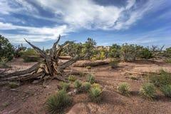 Parque nacional de Canyonlands Imagen de archivo