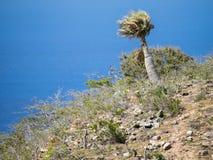 Parque nacional de Christoffel - árvores do plam Fotografia de Stock Royalty Free