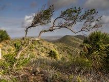 Parque nacional de Christoffel - palmeras Fotos de archivo libres de regalías