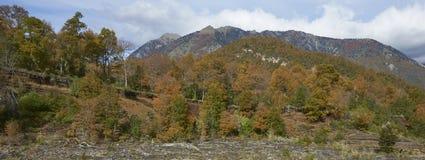 Parque nacional de Conguillio no Chile do sul fotografia de stock