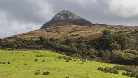 Parque nacional de Connemara - Irlanda Foto de archivo libre de regalías