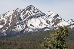 Parque nacional de Denali Imagens de Stock Royalty Free