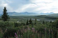 Parque nacional de Denali imagem de stock royalty free