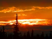 Parque nacional de Denali Foto de Stock