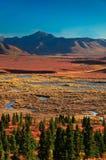 Parque nacional de Denali en otoño Fotografía de archivo libre de regalías