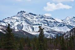 Parque nacional de Denali na mola fotografia de stock