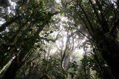 Parque nacional de Doi Inthanon Imagen de archivo