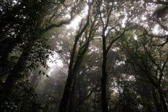 Parque nacional de Doi Inthanon Fotografía de archivo libre de regalías