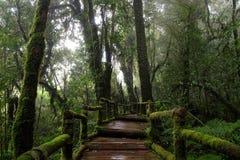Parque nacional de Doi Inthanon Fotos de archivo