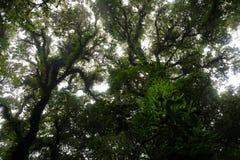 Parque nacional de Doi Inthanon Imágenes de archivo libres de regalías