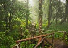 Parque nacional de Doi Inthanon, Chiang Mai Foto de Stock