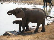 Parque nacional de Etosha Imagens de Stock Royalty Free