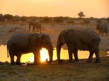 Parque nacional de Etosha de los elefantes Foto de archivo