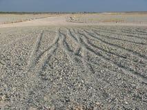 Parque nacional de Etosha do lago salt Imagem de Stock