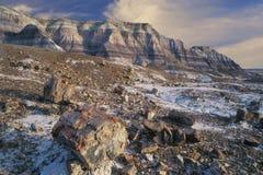 Parque nacional de floresta Petrified Imagem de Stock