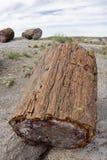 Parque nacional de floresta Petrified - o Arizona. Imagem de Stock
