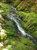 Parque nacional de Fundy, Novo Brunswick - Canadá foto de stock royalty free
