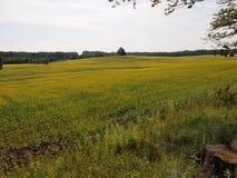 Parque nacional de Gauja (Letónia) Imagens de Stock