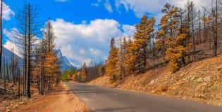 Parque 2015 nacional de geleira de Reynolds Creek Wildland Forest Fire das consequências imagens de stock