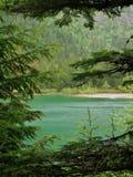 Parque nacional de geleira, lago avalanche através das árvores fotografia de stock royalty free