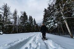 Parque nacional de geleira que neva no inverno Foto de Stock Royalty Free