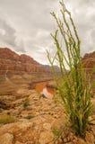 Parque nacional de Grand Canyon, Nevada Fotografía de archivo