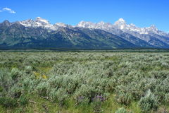Parque nacional de Grant Tetons Imagen de archivo